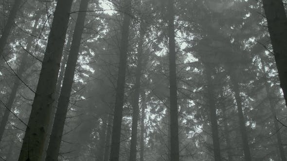 Thumbnail for Misty Woods