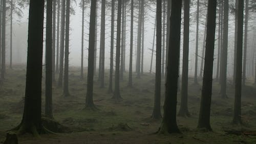 Spooky Forest in Mist