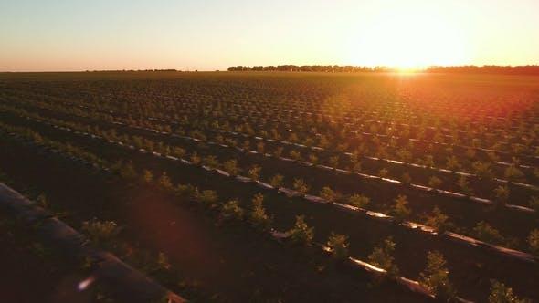 Amazing Sunset at Strawberry Field