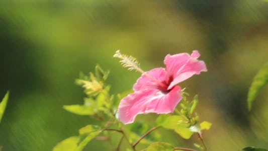 Thumbnail for Hibiscus Filter Blurred