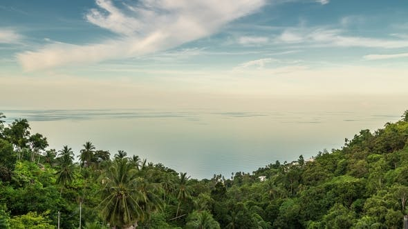 Cover Image for Coconut Palm Trees Along with Blue Sky and Sea Background, Seaview Landscape