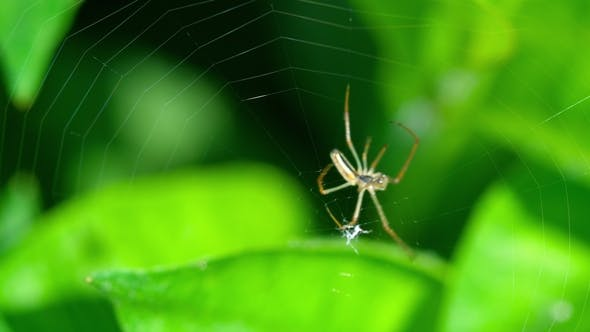 Thumbnail for Spider Weaves a Web