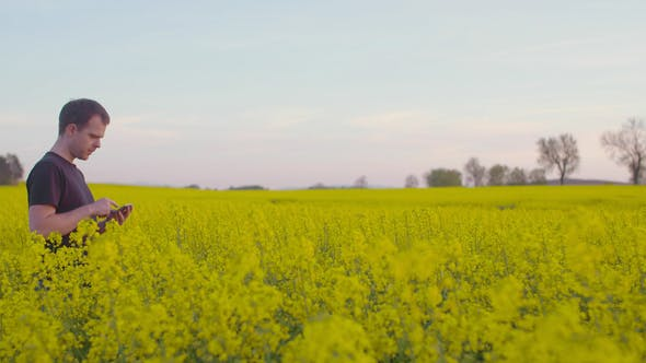 Thumbnail for Farmer Examining Rape Blossom on Field