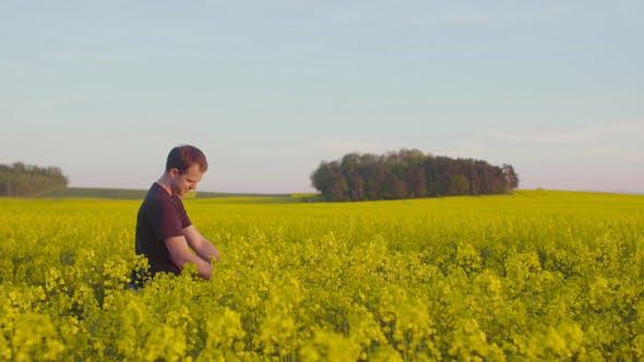 Farmer Examining Rape Blossom on Field