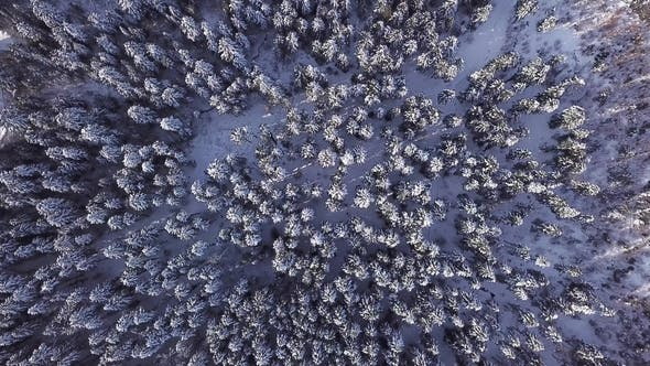 Thumbnail for Winter Coniferous Forest with a Copter
