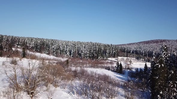 Cover Image for Snow Lies on the Ground Coniferous Forest. Aerial View