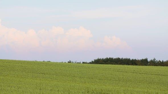 Thumbnail for Crops Growing In Farm Against Sky