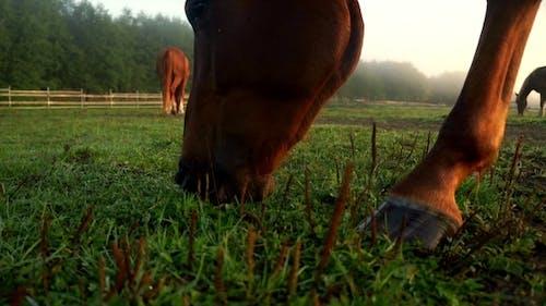 Pferd fressendes Gras auf dem ländlichen Feld. Pferde-Kopf