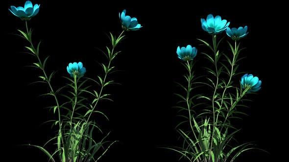 Thumbnail for 4K Wild Flower Growing Timelapse
