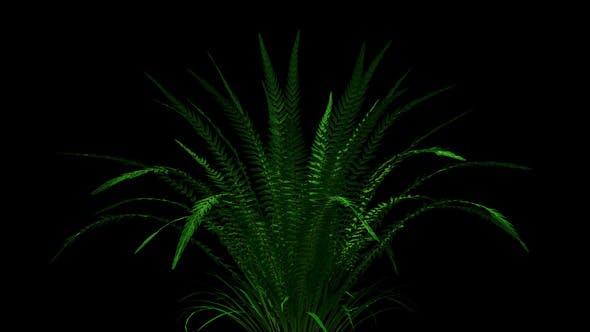 Thumbnail for 4k Fern Plant Growing Timelapse