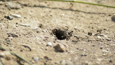Ant Hill with Ants