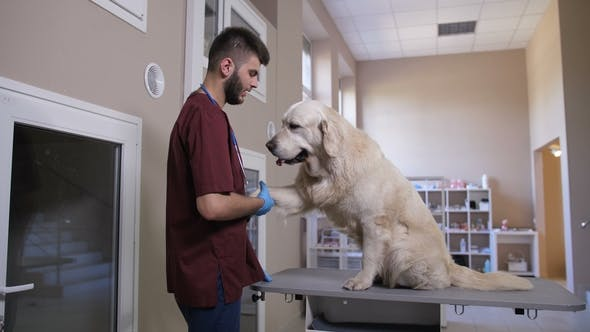 Thumbnail for Vet Shaking Paws with Dog Patient at Pet Clinic