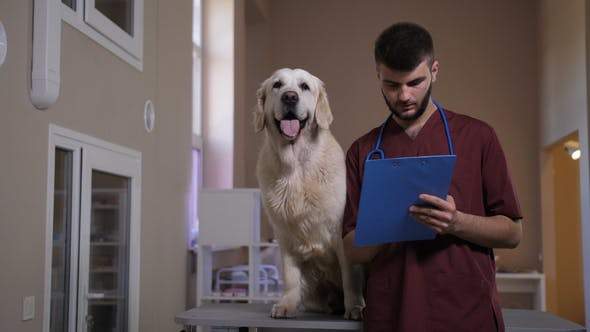 Thumbnail for Positive Vet Taking Notes on Dog's Diognosis