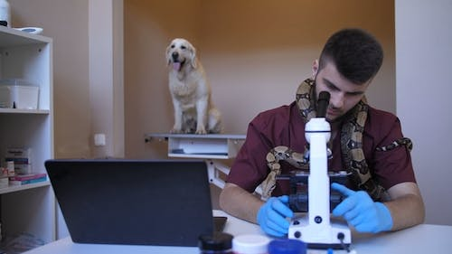 Veterinary Worker Using Microscope at Pet Clinic
