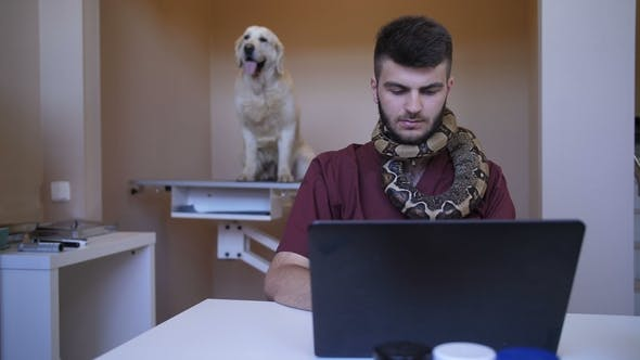Thumbnail for Vet Working on Laptop with Python Snake Over Neck