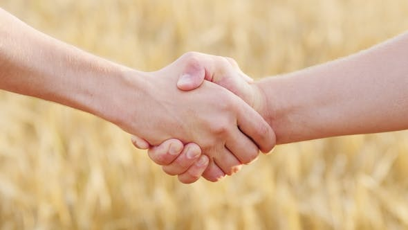 Thumbnail for Male Handshake of Two Farmers Against the Background of a Yellow Wheat Field