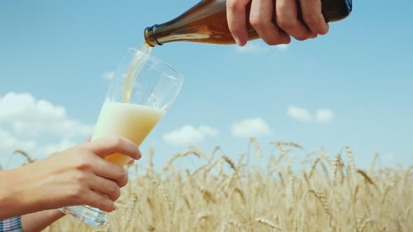 Cover Image for Pour a Cool Beer in a Glass on the Field of Ripe Golden Wheat