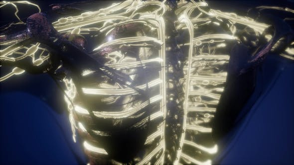 Thumbnail for Human Body with Glow Blood Vessels