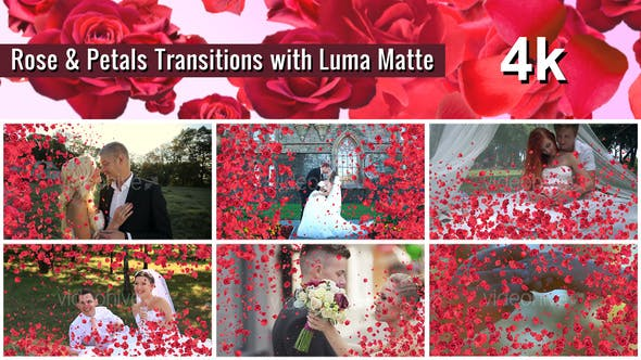 Thumbnail for Rose and Petals Transition with Luma Matte – 7 Variations - 4k