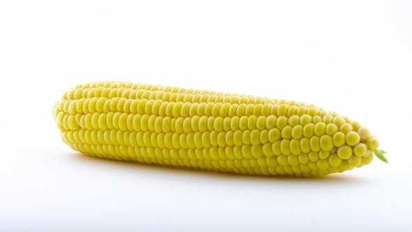 Thumbnail for One Fully Peeled Fresh Sweet Corn. Rotating on the Turntable. Isolated on the White Background