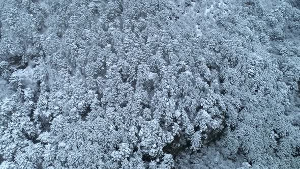 Thumbnail for Top Down View Of The Young Snow Covered Coniferous Forest