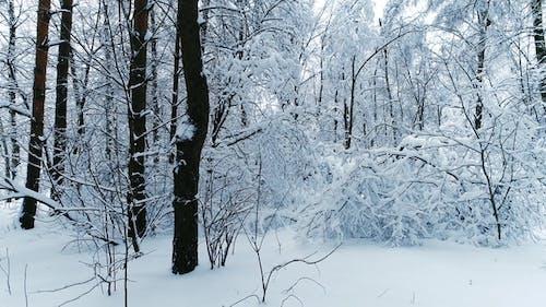 Verschneite Zweige im Wald. Winter Fee Hintergrund