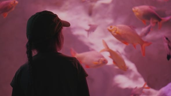 Cover Image for Silhouette of a Little Girl Looking at a Huge Aquarium with Sea Fishes. Inspiration and Impressions