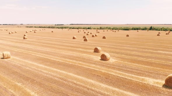 Thumbnail for Rural Field in Summer with Bales of Hay