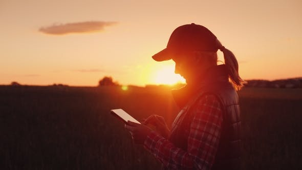 Thumbnail for Young Woman Farmer Working with Tablet in Field at Sunset. The Owner of a Small Business Concept