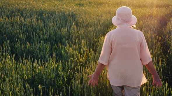 Thumbnail for An Elderly Female Farmer Is Walking Along a Field of Green Wheat. Hands Touching the Spikelets