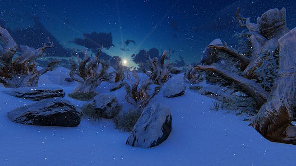 Winter Fairy Tale Forest