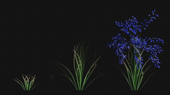 Thumbnail for Growing Blue Flower