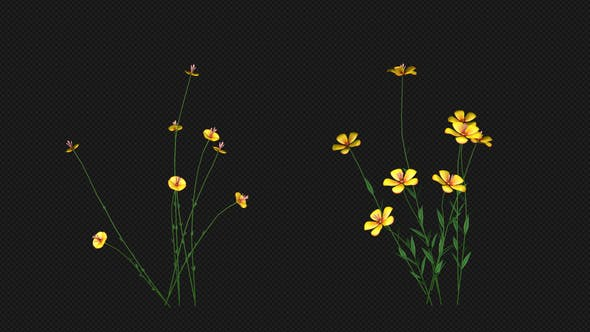 Thumbnail for Growing Yellow Flower