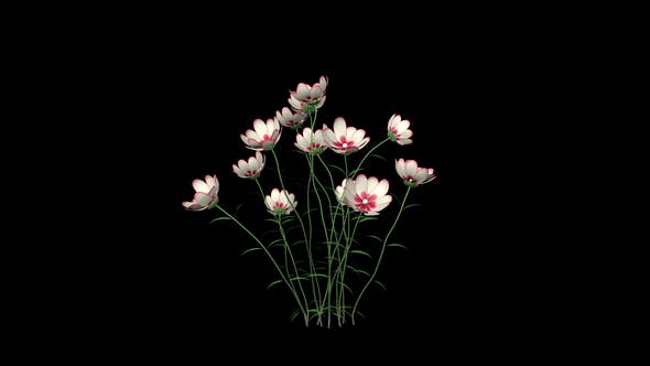 Thumbnail for Growing White Flowers