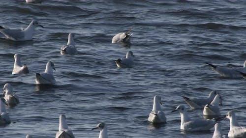 Flock Of Seagulls Swimming In Blue Ocean Water In Slow Motion