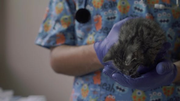 Thumbnail for Vet Hold a Small Kitten in His Arms