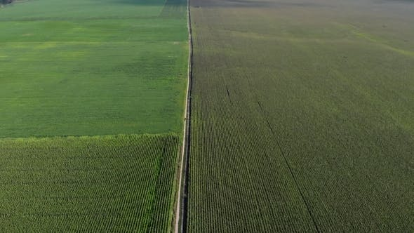Thumbnail for Aerial View of Large Green Fields with Even Rows