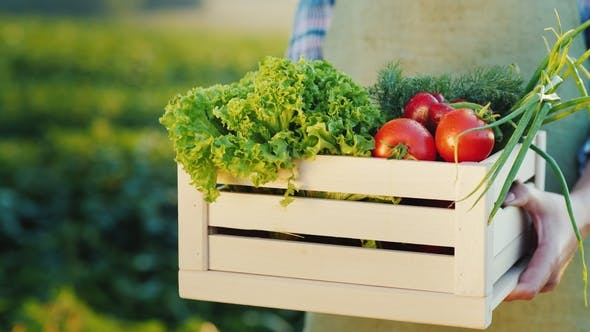 Thumbnail for Farmer Holding a Wooden Box with a Set of Fresh Vegetables with Sveogo Field. Organic Food From a