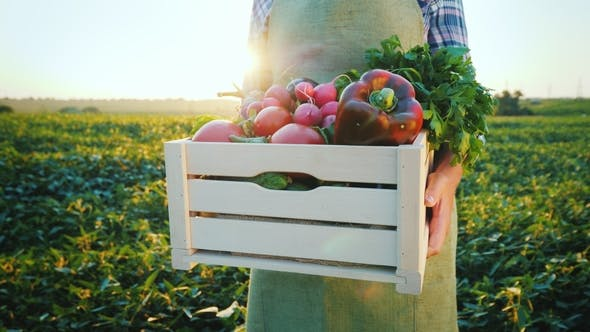 Thumbnail for A Young Farmer Is Holding a Wooden Box with Vegetables From His Field