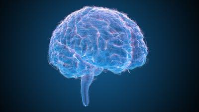 Brains Hologram