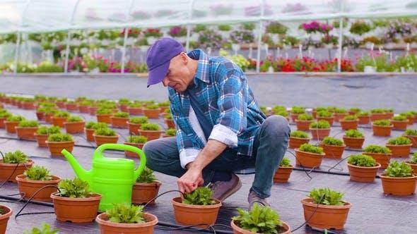 Thumbnail for Farmer Examining Plants on Farm