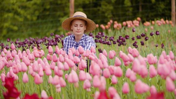Thumbnail for Weiblich Bauer Untersuchung rosa Tulpe Blumen bei Feld