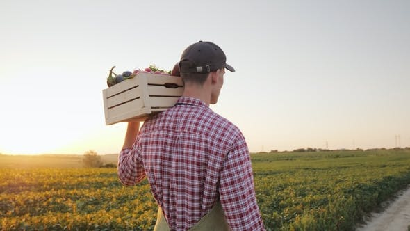 Thumbnail for A Young Male Farmer Walks Along the Field with a Box of Fresh Vegetables. Back View
