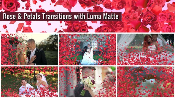 Thumbnail for Rose and Petals Transition with Luma Matte – 7 Variations