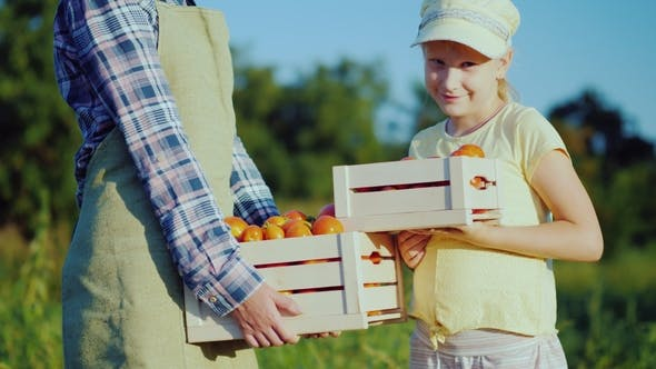 Thumbnail for Woman Farmer with Daughter Holding a Box of Tomatoes From Their Field