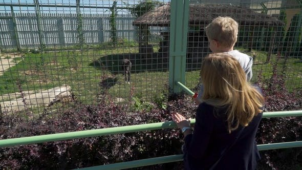 Thumbnail for Mother with Son at the Zoo Looking at Wolf