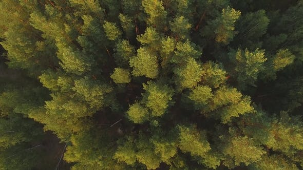 Thumbnail for Aerial View on the Summer Trees and Forest