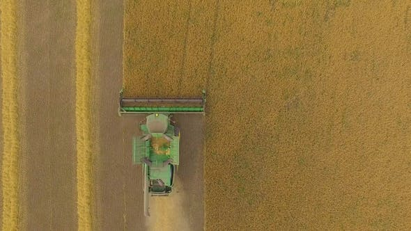 Thumbnail for Aerial View on the Combine Working on the Large Wheat Field