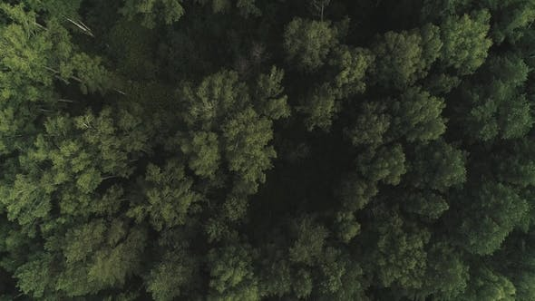 Thumbnail for Aerial of Flying Over a Beautiful Green Forest