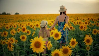 Mother and Daughter at the Sunflower Field. Mother and Daughter in Hats Are Walking Through